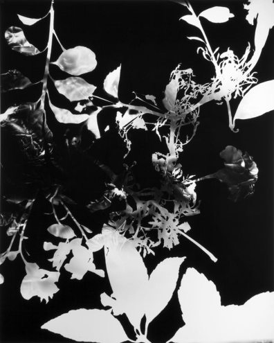 "Greg Wilken, ""9 Bouquets for Kathy Fiscus,"" 2010, (detail), Framed litho film radiograph, book, case, and table, 23 x 18 inches (58.4 x 45.7 cm), Series of 9"